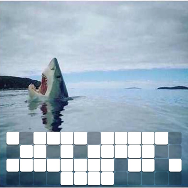 A Rare image of a shark stepping on a lego