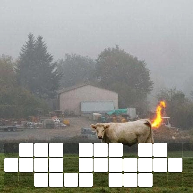 The cow is just passing some gas