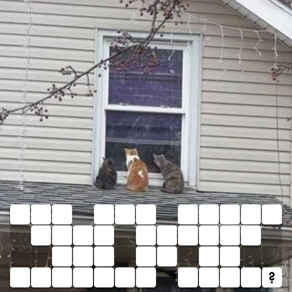 Are all these cats called Tom as in peeping toms?