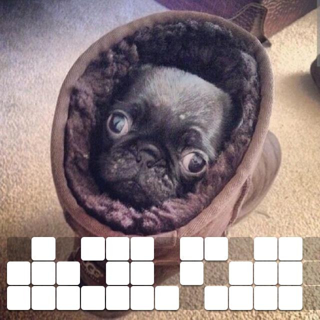 A pug in an ugg on a rug looking snug