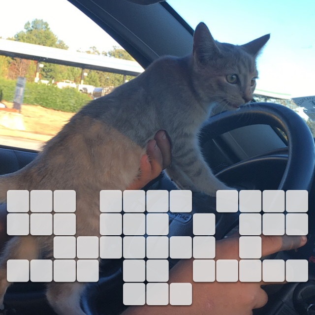 You take your dog for a car ride... I take my kitty cat