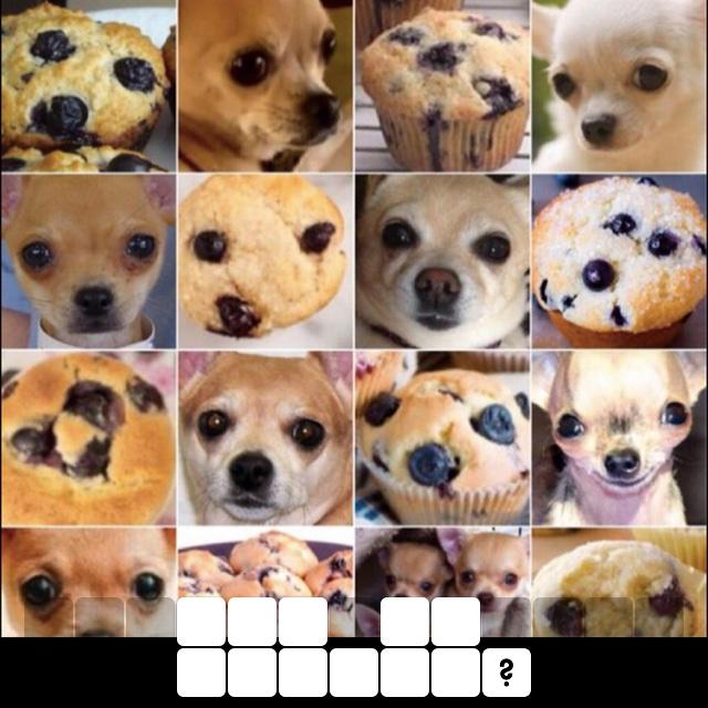 Dog or muffin?