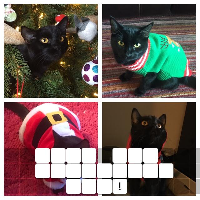 Meet the Christmas Cat!